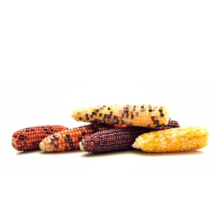 乾燥トウモロコシ